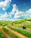Vaca en un prado del verano Imagen de archivo libre de regalías