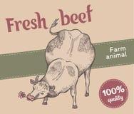 A vaca está comendo a grama Foto de Stock Royalty Free