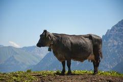A vaca gorda está estando em um monte e aprecia o vista Fotografia de Stock