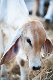 Vaca linda Foto de archivo
