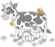 Vaca manchada que alimenta su pequeño becerro Foto de archivo libre de regalías