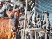 Vaca na Índia imagem de stock