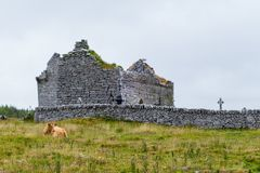 Vaca na frente da igreja Carron fotos de stock