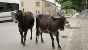 Vaca na rua na cidade - Mestia, Geórgia vídeos de arquivo
