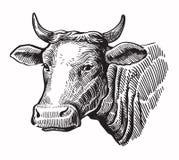 Vaca negra del vector stock de ilustración