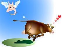 Vaca no amor Fotos de Stock