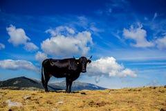 Vaca no céu Fotografia de Stock Royalty Free