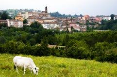 Vaca no campo perto da vila Imagem de Stock Royalty Free