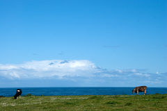 vaca no horizonte Foto de Stock Royalty Free