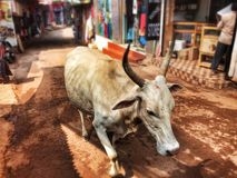 Vaca no mercado Imagem de Stock