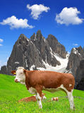 Vaca no prado fotografia de stock royalty free