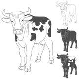 Vaca preto e branco do vetor Vista lateral objetos Imagem de Stock Royalty Free