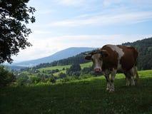 Vaca que se coloca en prado de la montaña con la visión en las montañas y las nubes hermosas fotos de archivo