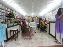 Vaca sagrada que miente en el medio de una tienda Foto de archivo