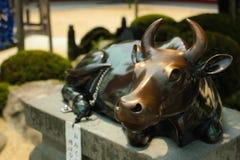 Vaca santamente no santuário Foto de Stock