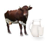 Vaca sobre blanco Fotografía de archivo libre de regalías