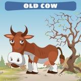 Vaca vieja en la tierra, carácter del oeste salvaje Imagenes de archivo