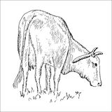 Vaca vietnamita Ilustración del Vector