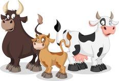 Vaca, vitela e touro dos desenhos animados Imagens de Stock Royalty Free
