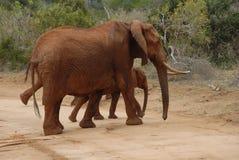 Vaca y bebé del elefante Fotos de archivo