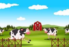 Vaca y granja Imagen de archivo libre de regalías