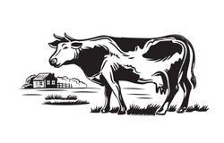Vaca y granja Foto de archivo libre de regalías