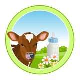 Vaca y leche Imágenes de archivo libres de regalías