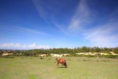 Vaca y pastos foto de archivo