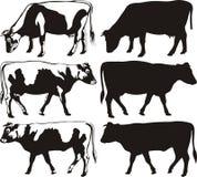 Vaca y toro - siluetas Foto de archivo libre de regalías