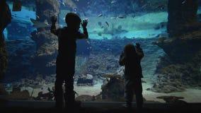 Vacaciones de familia, pequeños muchachos curiosos cerca del acuario grande que miran la vida subacuática del mundo de pescados almacen de video