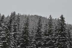 Vacaciones de invierno en Zakopane Imágenes de archivo libres de regalías