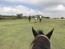 Vacaciones de la equitación en México foto de archivo