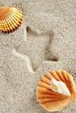 Vacaciones de la impresión de la estrella del shell de la almeja del verano de la arena de la playa Foto de archivo libre de regalías