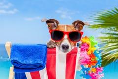 Vacaciones de las vacaciones de verano del perro fotografía de archivo libre de regalías
