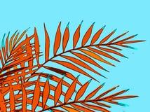 Vacaciones de verano de un fondo abstracto con las hojas de palma fotografía de archivo
