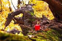 Vacances automnales bougie sur l'arbre avec de la mousse Photos libres de droits