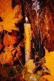 Vacances automnales bougie sur l'arbre avec de la mousse Photo libre de droits