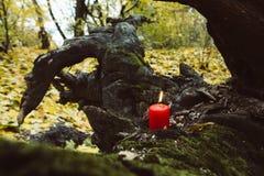 Vacances automnales bougie sur l'esprit d'arbre Images stock