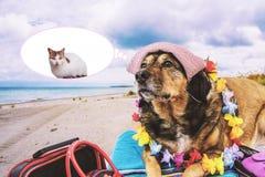 Vacances Chien et Cat On la plage Images libres de droits