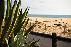 Vacances d'été de dépense en belle plage sablonneuse du Portugal du sud Photos libres de droits