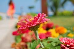Vacances d'été - fleur entraînante et une silhouette de fille Photos stock