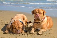 Vacances d'animal familier d'été Images stock