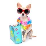 Vacances d'été de chien Photo libre de droits