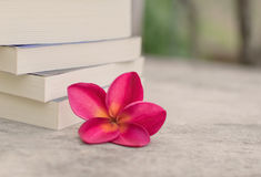 Vacances de détente avec les livres préférés Photographie stock libre de droits