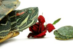 Vacances de tortue Images libres de droits