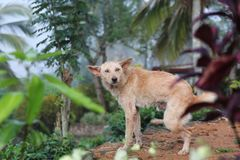 Vacances de voyage de parc du Sri Lanka de jungle de chien Photographie stock libre de droits