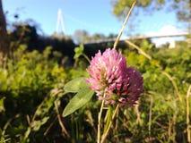 Vacances de voyage de pousse de nature de fleur de ressort photo libre de droits