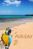 Vacances et perroquet de mot sur la plage Photos libres de droits