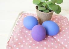 Vacances Pâques Pâques Composition décorative Oeufs de pâques avec une fleur dans un pot Les oeufs de pâques sont pourpres et ble Image libre de droits