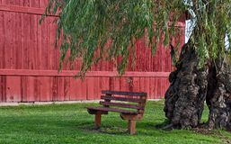 Vacant bench under willow tree Stock Photography